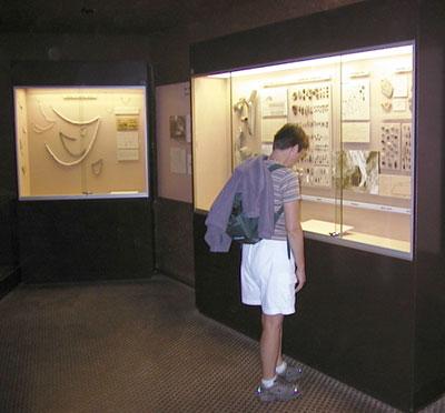 Le musée Amédée Lemozi
